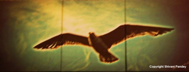 High, High like an Eagle...